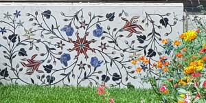 Himalayan Blue Poppies score a boundary at the Chelsea Flower Show